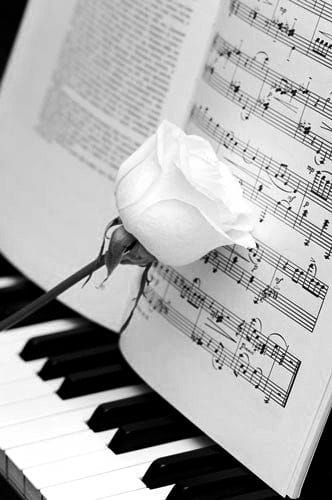 BW photo music piano rose